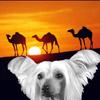 Юрій Шеляженко: караван идет собака лает