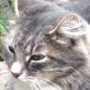 Юрій Шеляженко: кот