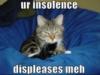 professornana: insolent cat