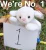 Lamb-No.1