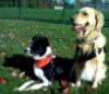 Brenda Cooper: sasha and nix fall park