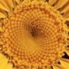divineanimal userpic