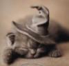 Волшебная котейка