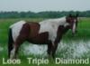 hookedonhorses userpic