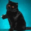 gothic_cat_87 userpic