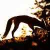 krohi_na_ladoni userpic