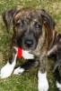 DollyRockerHellhound