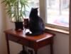 just_1_cat userpic