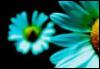 fleur806