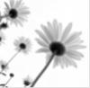 kvitsun userpic