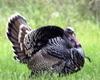 sgt_turkey userpic