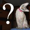 questioncat