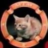 MTM Kitten