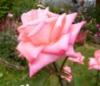 florique userpic