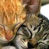 lackofmendacity (Diana): fluffy love - kittens