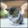 katie_angelise userpic