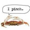 Pinch, Silliness, Crabby
