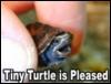 Tiny turtle is pleased