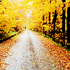 walkthepattern userpic