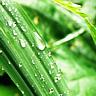 sparklywater userpic