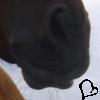 konioczlap userpic