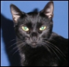 bastet_the_cat userpic