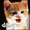 Dang Kitty! Kitty Dang Dang