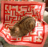 pds_lit: Red Cat Quilt