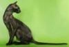 чёрная кошка на зелёном фоне