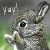 bunny (yay!)