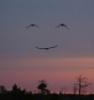 грустная улыбка