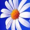 daisy294 userpic