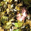 I'm leafing