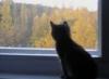 смотрящий в осень, котенок