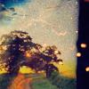 :): tree sunrise