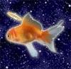 Celestial Goldfish