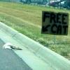 Free Cat!