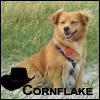 cornflake2912