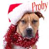 NH: Pets: Probert Santa