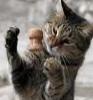 happycat_dnp