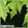 tigg_prinny_inc userpic