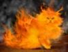 lohquesse: Firecat