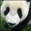 Panda Warrior Versus The World