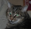 Medyani: Antonio wierdo cat