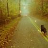 littlehounddog userpic