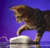 пользователь, мышка, котенок