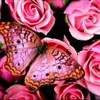 ani_flower userpic
