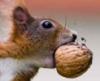 belka_domi: белк с орехом