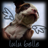 Genevieve: dog: lulu angel