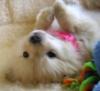 Doggy =]